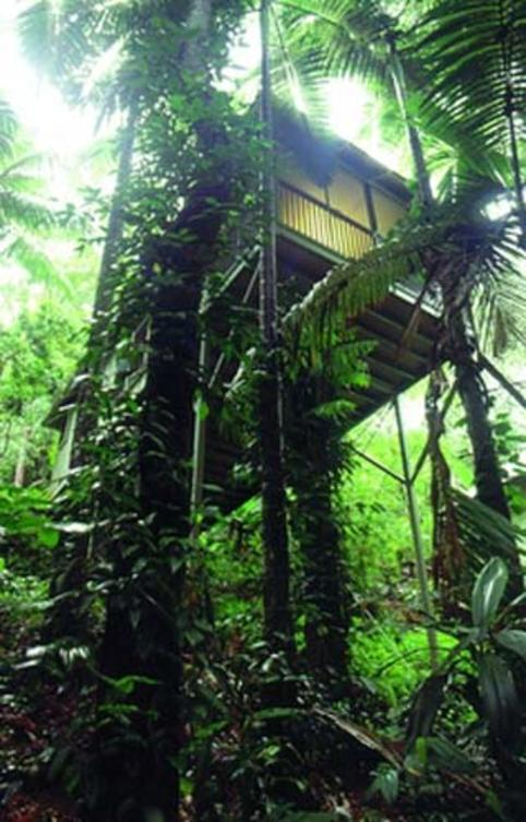 Daintree-Ecolodge